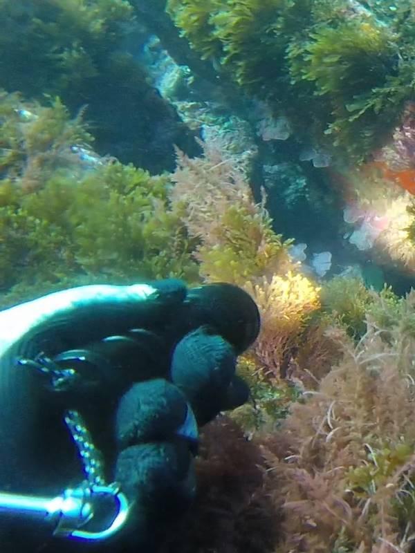 Linternas para pesca submarina