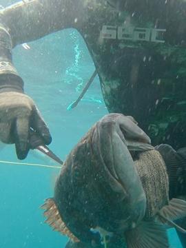 Cuchillos de pesca submarina